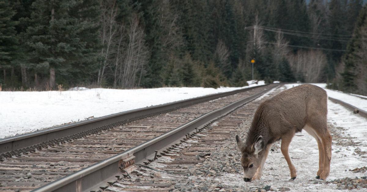 treni che abbaiano in giappone rail academy